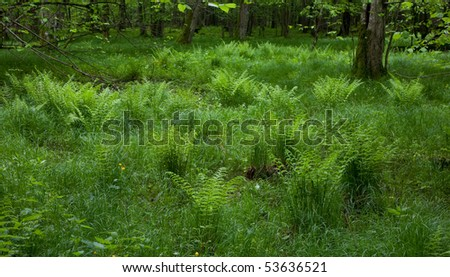 Fresh green grass and ferns in springtime - stock photo
