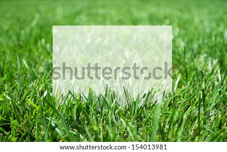 fresh green grass and place for your text - stock photo
