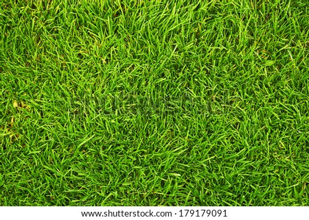 fresh green grass as background