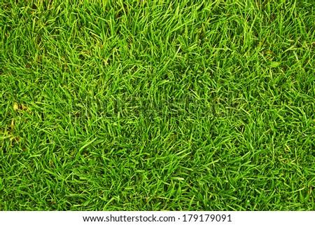 fresh green grass as background - stock photo