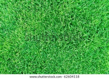 fresh green grass background - stock photo