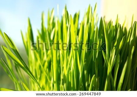 Fresh green grass background. Spring or summer abstract season nature background with grass. - stock photo
