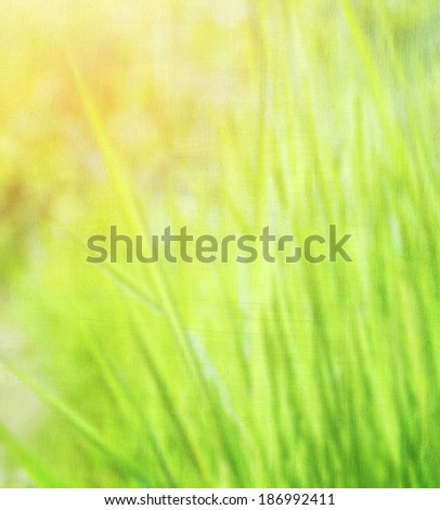 Fresh green grass background, sunny day, natural textured wallpaper, beautiful nature, eco environment, spring nature concept - stock photo