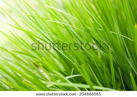 fresh green grass close up nature background - stock photo