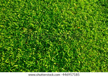 fresh green grass field for background or texture