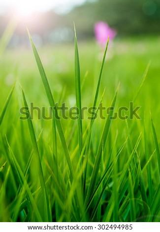 Fresh green grass in sunshine - stock photo