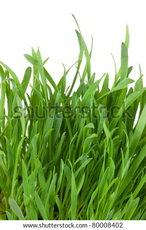 Fresh green grass isolated on white background - stock photo