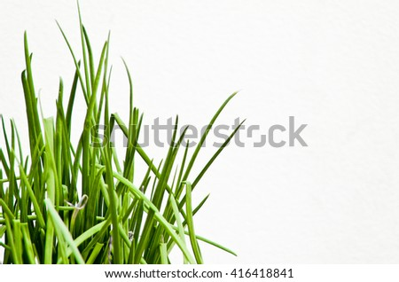 fresh green grass isolated white BG ( out of focus + high saturation )  - stock photo