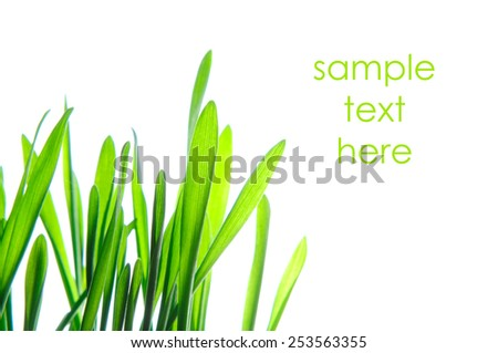 fresh green grass lawn isolated on white background - stock photo