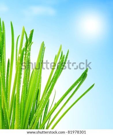 Fresh green grass macro border over blue clean sky background, healthy nature concept