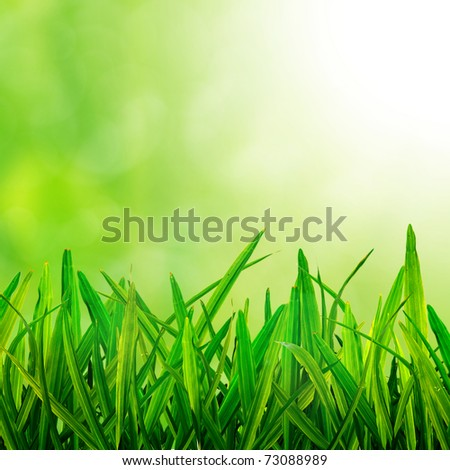 Fresh green Grass on fresh background - stock photo
