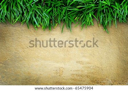 Fresh green grass on sand stone background - stock photo