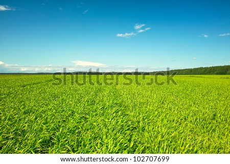 Fresh green grass on sunny field, blue sky with light white clouds - stock photo