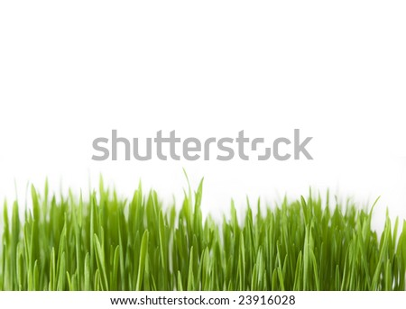 Fresh green grass  on white background close up