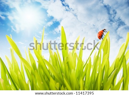 Fresh green grass over cloudy sky - stock photo