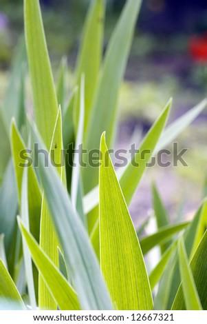 Fresh green grass (shallow DoF) - stock photo