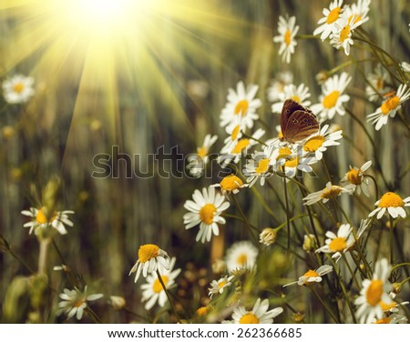 Fresh green grass with daisies and butterflies on meadow - stock photo