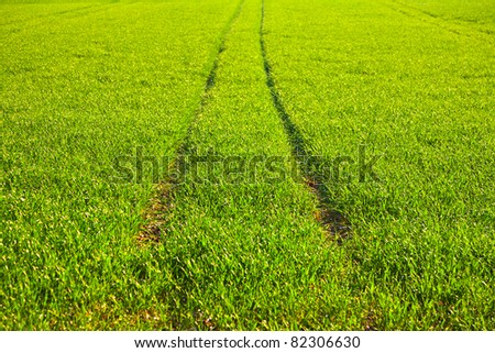 fresh green grass with dew and mark of tractor - stock photo