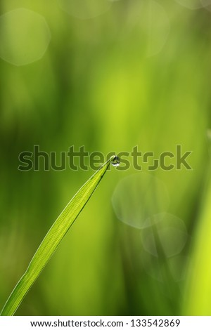 Fresh green grass with dew drop
