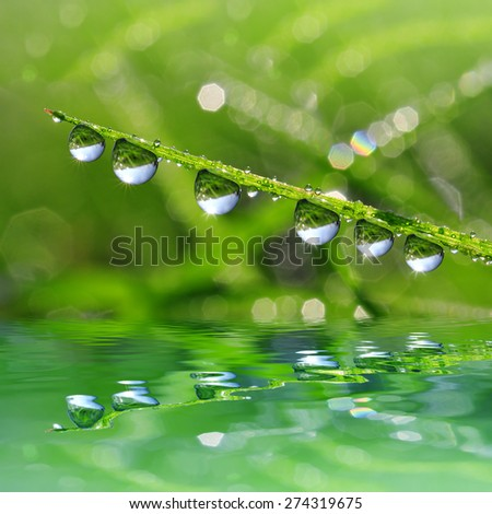 Fresh green grass with dew drop closeup. Nature Background - stock photo