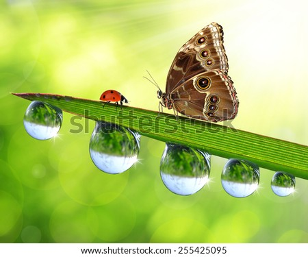 Fresh green grass with dew drops, butterfly and ladybird. Natural background. - stock photo