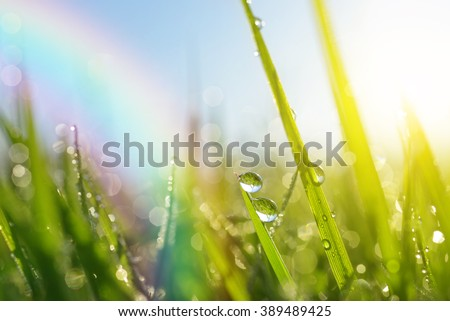 Fresh green grass with dew drops closeup. Soft Focus. Nature Background - stock photo