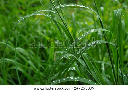 Fresh green grass with drops of water - stock photo
