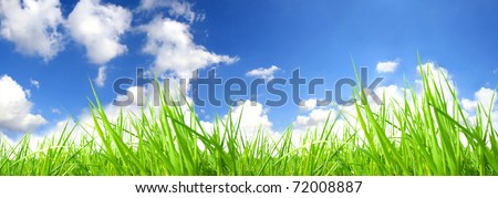 Fresh green grass with perfect sky background - stock photo