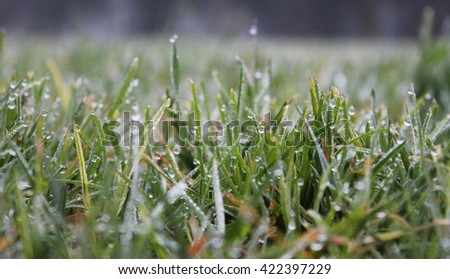 Fresh green grass with water beads on a cold morning - stock photo