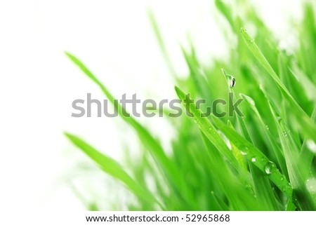 Fresh green grass with water droplet - stock photo