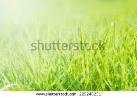 Fresh green grass with water droplet on sunshine for background
