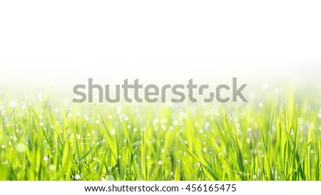 fresh green grass with water drops and copy space - stock photo
