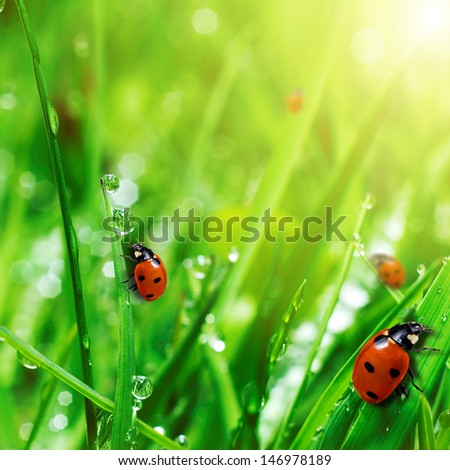 fresh green grass with water drops and ladybugs close up - stock photo