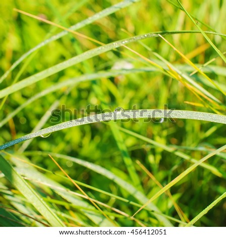 fresh green grass with water drops close-up - stock photo
