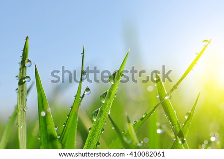 Fresh green grass with water drops closeup. Soft focus. Nature Background - stock photo