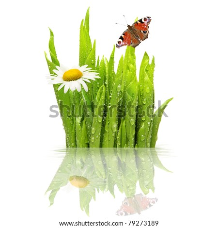 Fresh green grass with water drops, isolated on white - stock photo