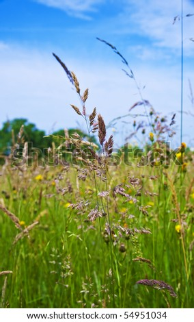 fresh green grass with wild flowers on the meadow - stock photo