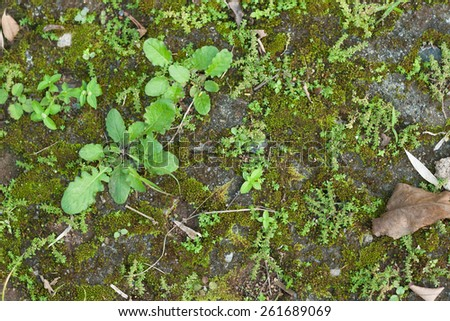 Fresh green grasses weed on ground in cement block as background - stock photo