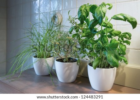 Fresh green herbs in a pot - stock photo
