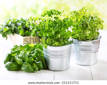 fresh green herbs in pots on wooden table - stock photo