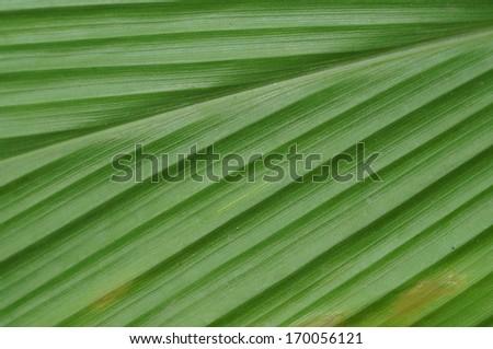 fresh green Leaf - stock photo