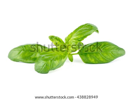 Fresh green leaf basil Isolated on white background