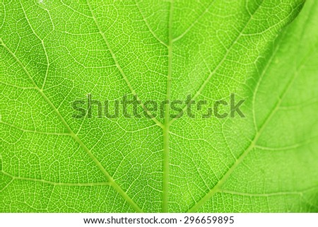 Fresh green leaf, close up - stock photo