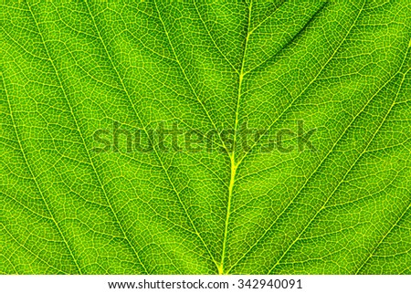 Fresh Green Leaf - Close Up./ Fresh Green Leaf - Close Up - stock photo