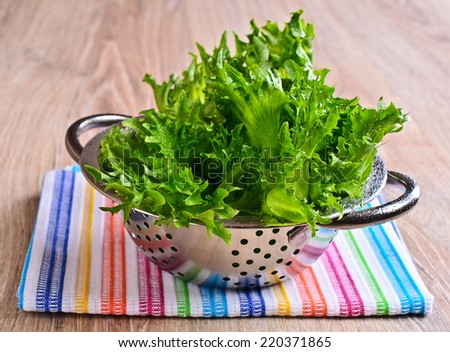 """Fresh green leaf lettuce """"frillis"""" with water drops lie in a metal colander  - stock photo"""
