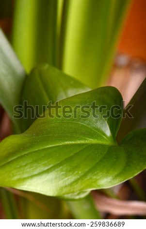 Fresh green leaf macro close-up - stock photo