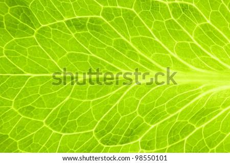 Fresh Green Leaf of Lettuce  / Super Macro - stock photo