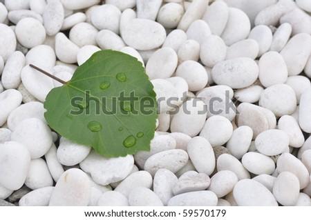 Fresh green leaf on white stones - stock photo