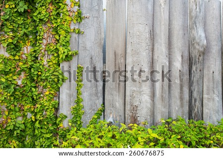 Fresh green leaf plant over wood fence background - stock photo