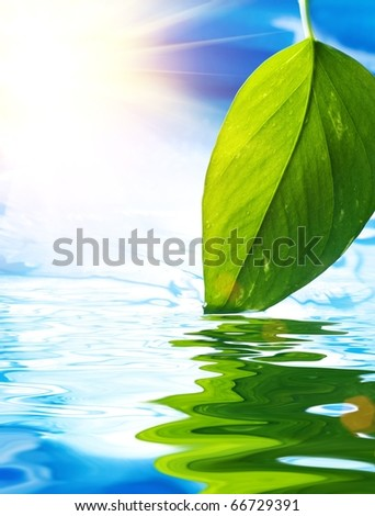Fresh green leaf reflected in blue water - stock photo